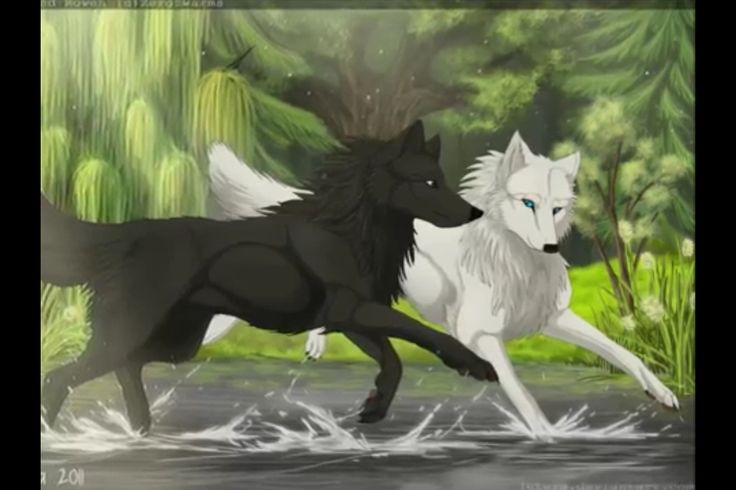 Sad Girl In Snow Wallpaper Wolves Running Together Wolves Pinterest Wolves