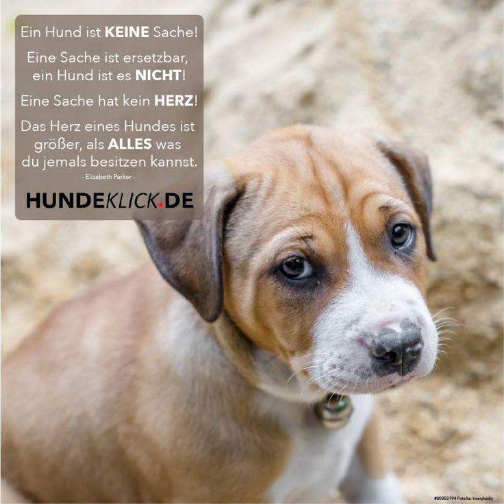 103 besten Sprüche mit Hund Bilder auf Pinterest | Hund