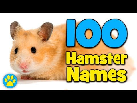 100 Hamster Name Ideas! YouTube Hamster names, Cute