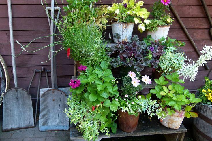 Ręcznie wykonany stojak na kwiaty - z niepotrzebnych drewnianych desek. #hydrobox #hydroboxpl #kwiaty #sadzonki #pomysly #truskawki #owoce #flowers #doniczki #donice #flowerpot #diy #inspirations #ideas #pomysly #handmade