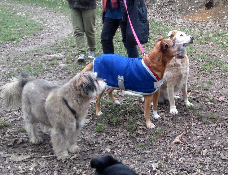 20/11/2016 - Torino con Otto, Yuma e Peja