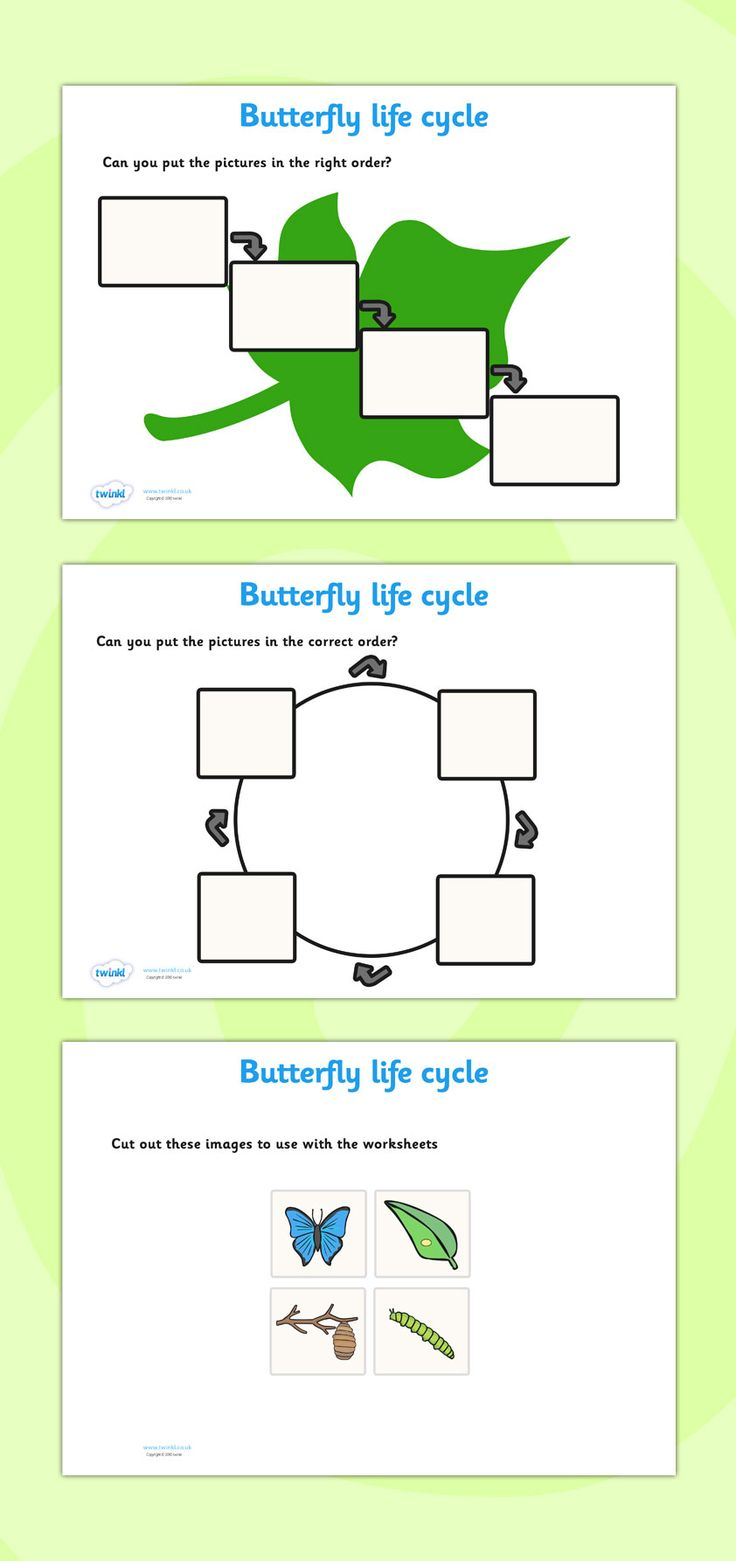 Workbooks life cycle of a plant worksheets : The 25+ best Malaria life cycle ideas on Pinterest   Malaria cycle ...