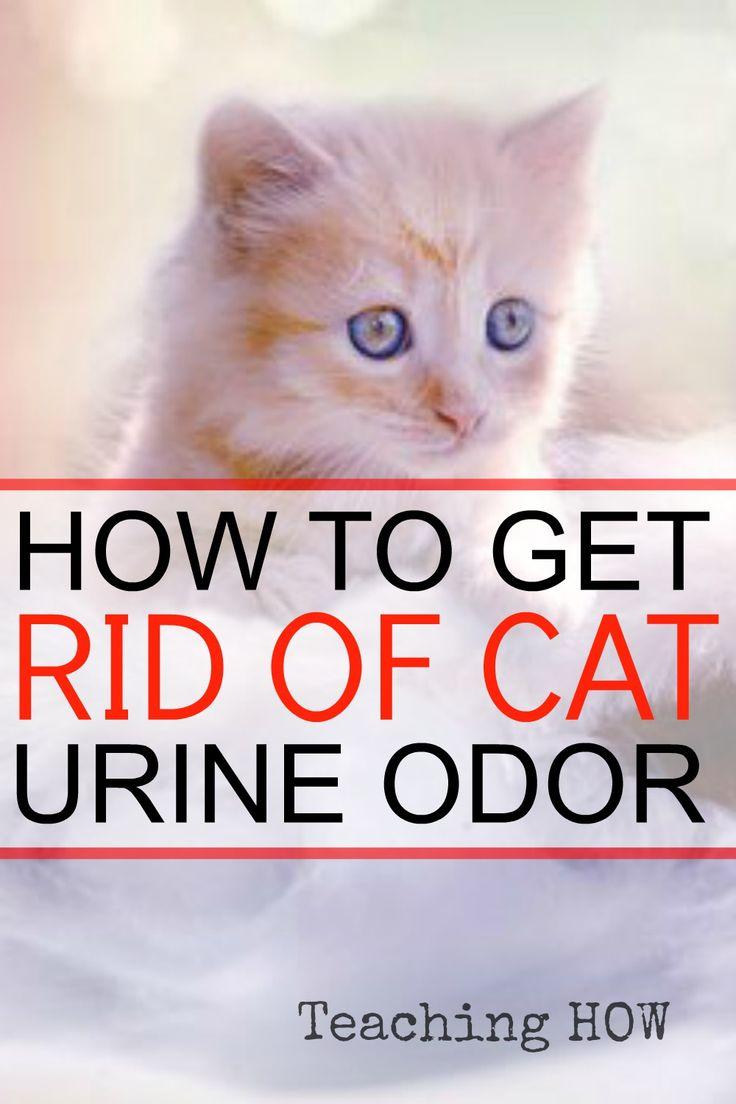 Cat urine smells like burnt hair / Reddcoin vs litecoin