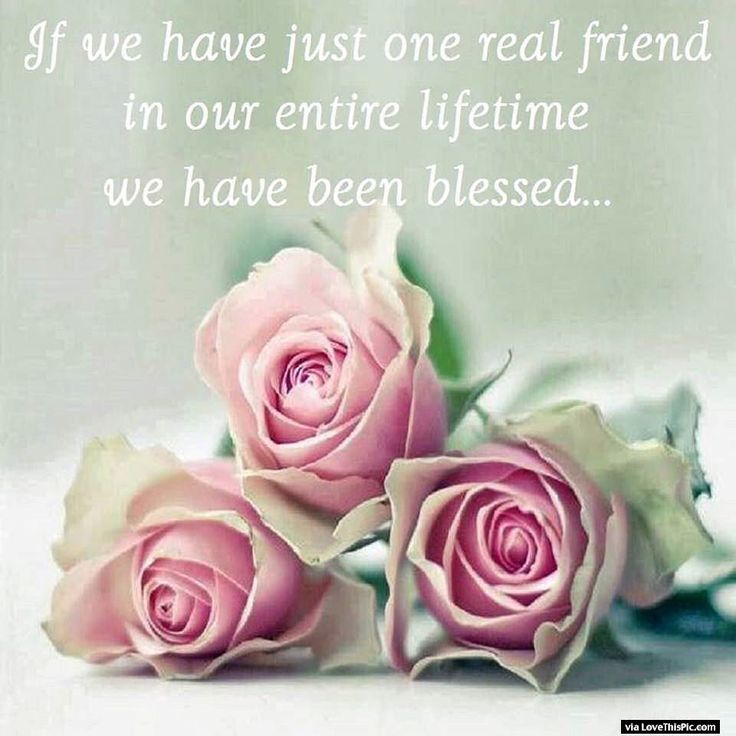 If We Have One Real Friend In Our Lifetime Are Truly Blessed Life Quotes Rose FlowersPink RosesPretty