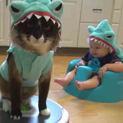 Say Goodbye to Shark Week With a Shark-Cat on a Roomba