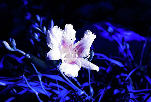 beautiful lily In the dark by Olga Olay #OlgaOlayFineArtPhotography #ArtForHome #FineArtPrints
