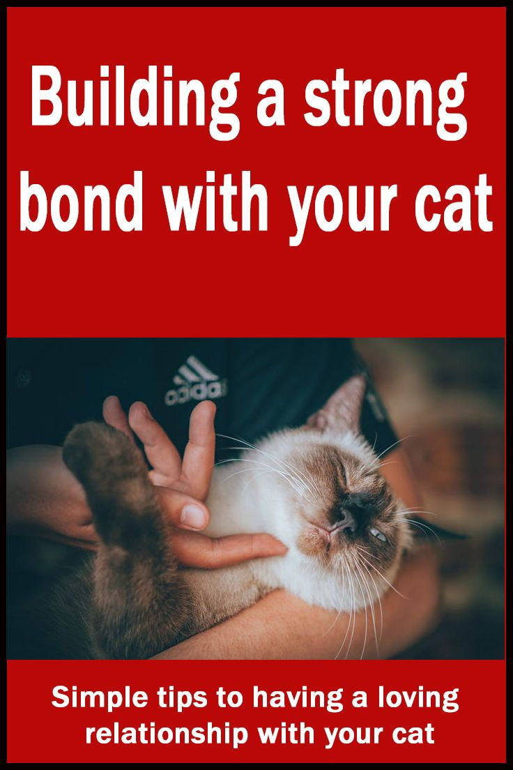 Building A Strong Bond With Your Cat Saving Cats Dogs And Cash In 2020 Cats Saving Cat Cat Behavior Problems