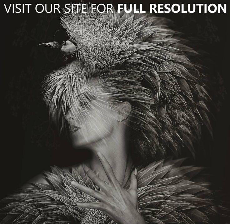 Beauté Aviaire Project by Lee Howell | CrispMe