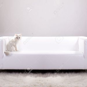 White Leather Sofa And Cats
