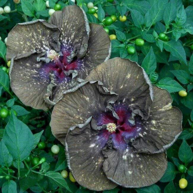 237 best hibiscus images on pinterest small gardens garden ideas ferenc j ccuart Image collections