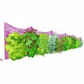 Les 25 meilleures id es de la cat gorie haie persistant sur pinterest plante persistant haies - Arbuste decoratif persistant ...