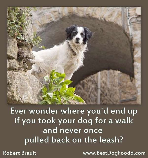 for more pawsome dog quotes visit http://www.bestdogfoodd.com/dog-sayings-tributes/