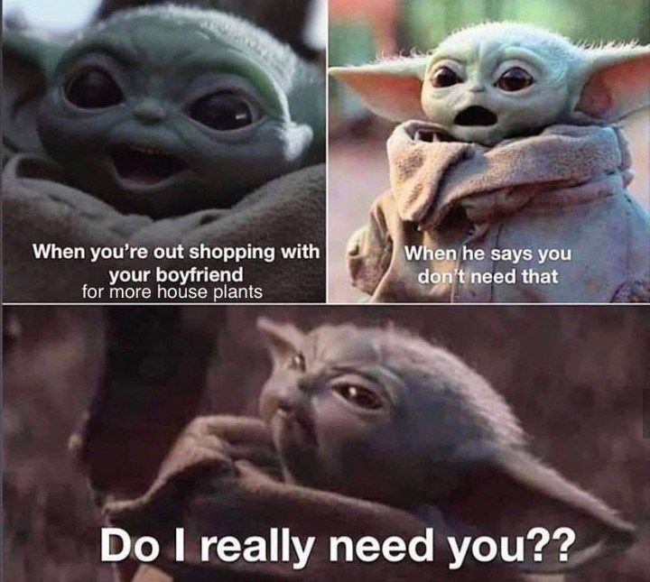 Plant Memes For People With Green Thumbs Yoda Funny Funny Star Wars Memes Yoda Meme