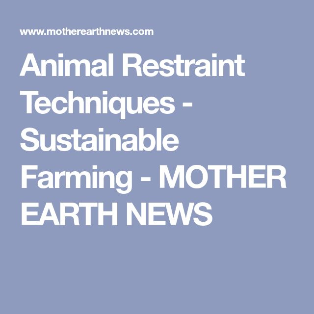Animal Restraint Techniques - Sustainable Farming - MOTHER EARTH NEWS