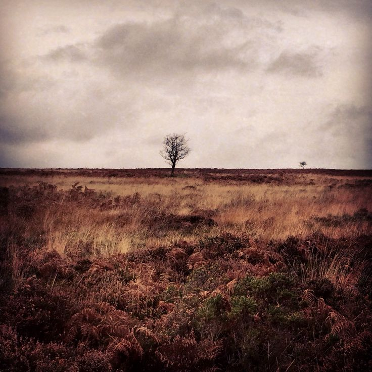 #tree #landscape #Beauty at Dunkery Hill, Exmoor