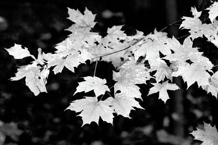 Olga Olay Photograph - The Beauty Of Fall In Black And White by Olga Olay #OlgaOlayFineArtPhotography #ArtForHome #FineArtPrints #Fall #Homedecor