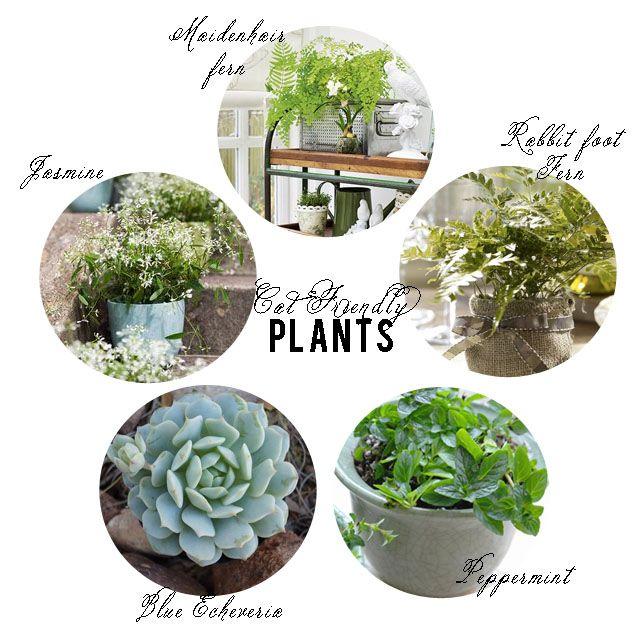 Safe Indoor Plants