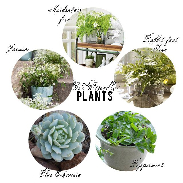 1000 images about inside gardens on pinterest pet safe for Dog safe houseplants