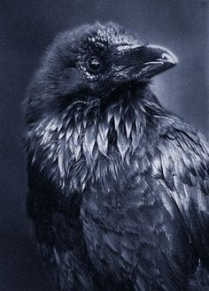 Rodney Raven....
