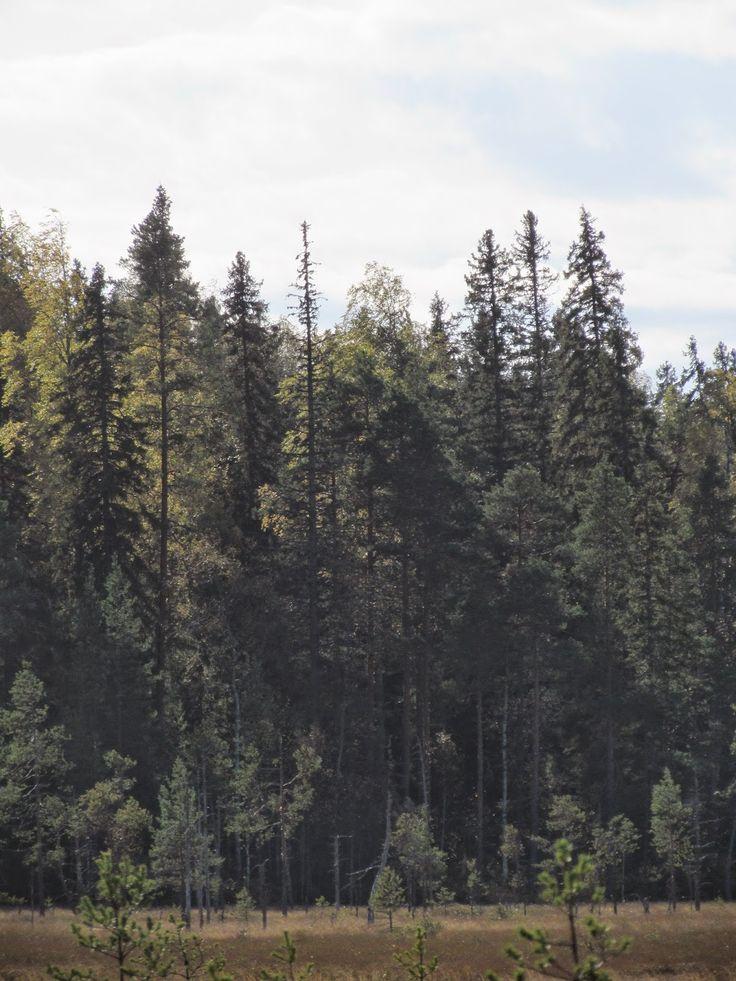 Kirkas-Soljanen, Seitseminen National Park