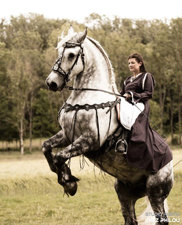 1st medieval festival of Carspach. #DraftHorse #Horse