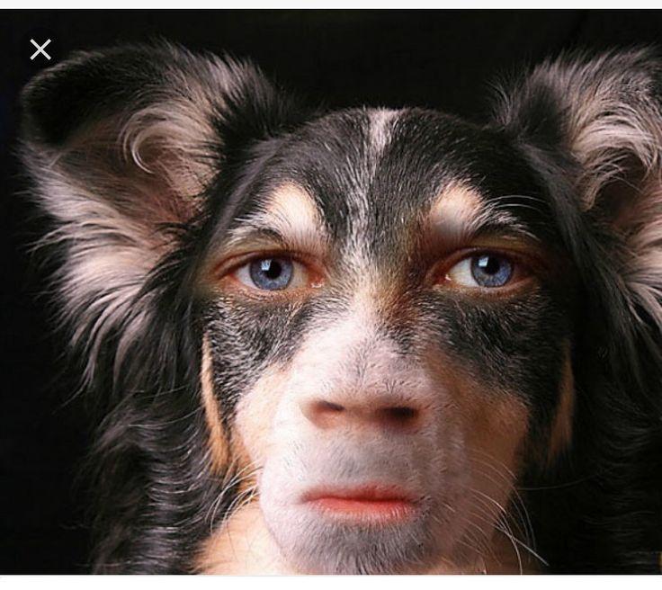 dog that looks human - 800×533
