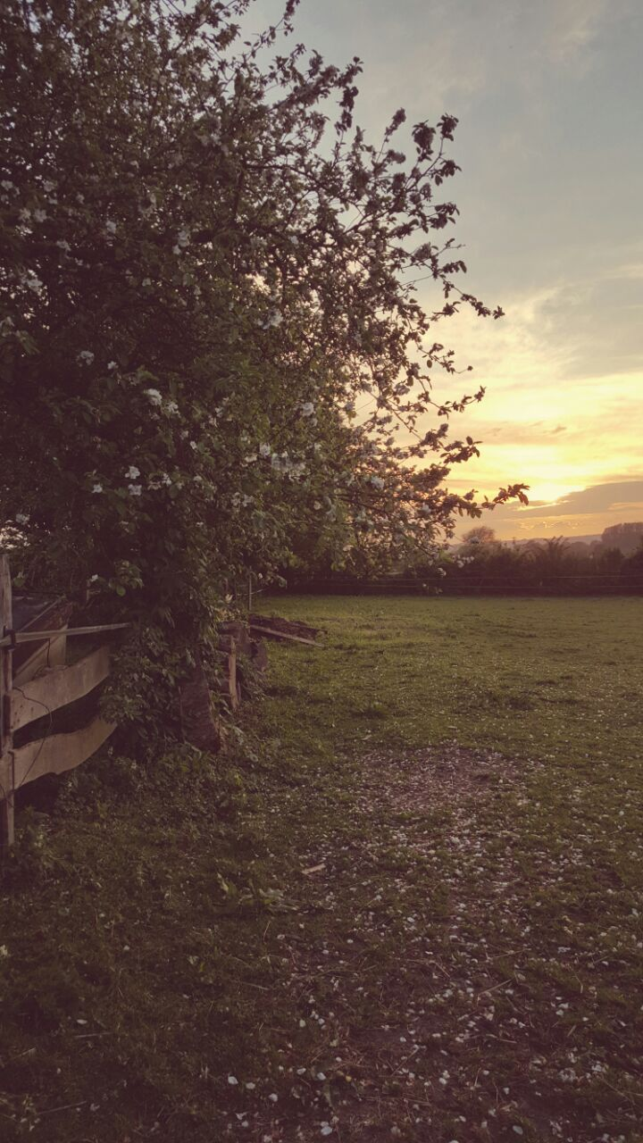 Zonsondergang op de wei