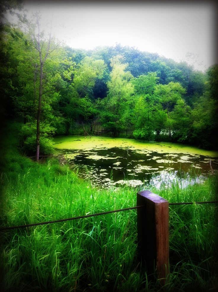 The pond, State parks and Illinois on Pinterest