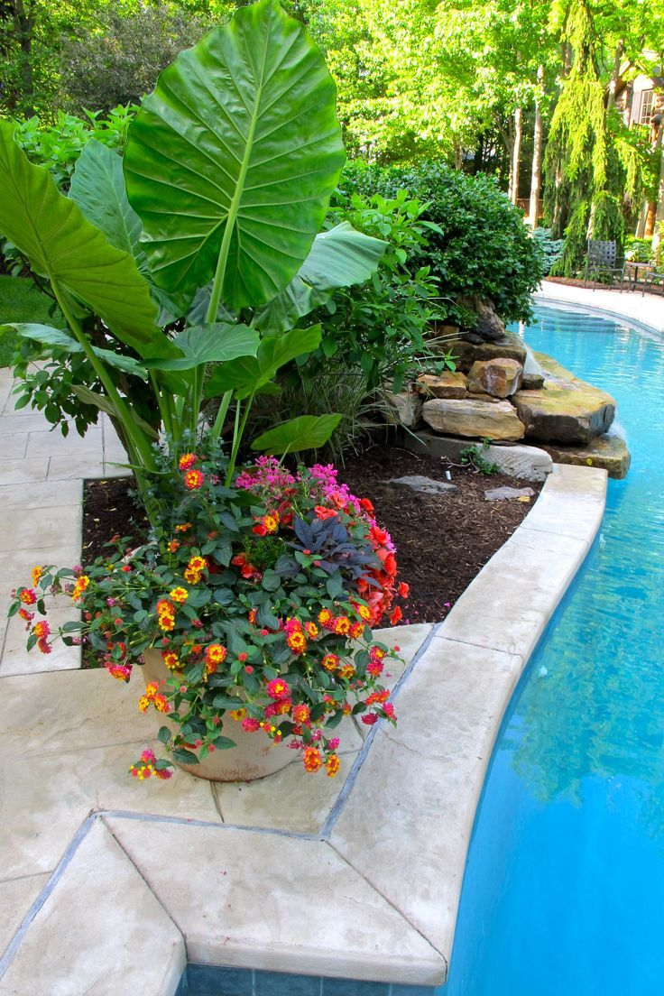 Image result for ideas for potted plants around pool and waterfall
