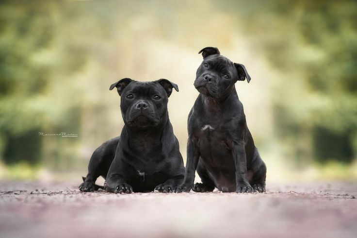 Sil & Dodge #Dream # Dogs #Photography