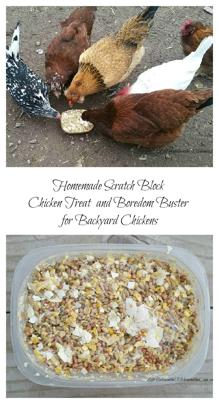 best 25 chicken treats ideas on pinterest what to feed chickens