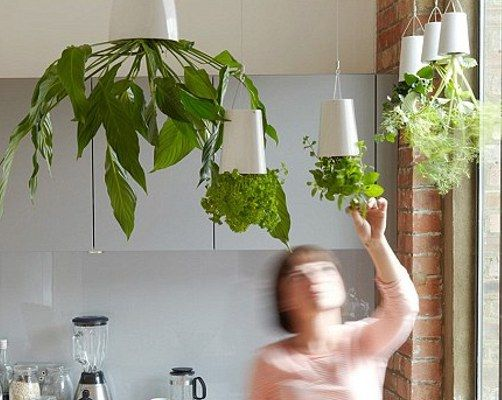 1000 images about grow green upside down on pinterest - Can a plant grow upside down ...