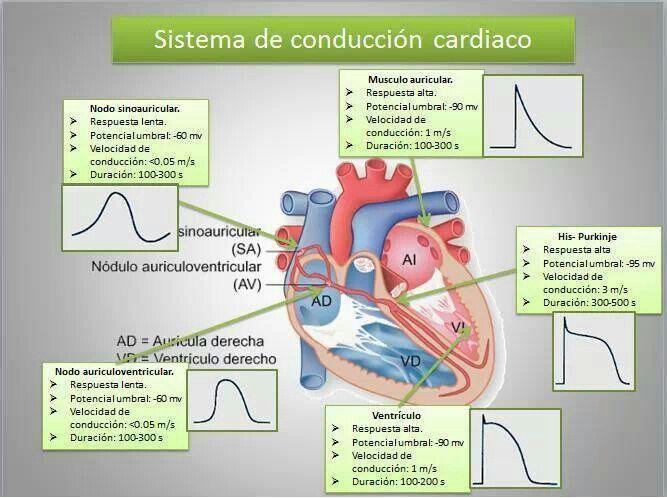282 best Enfermería images on Pinterest | Enfermería, Cuidado de la ...