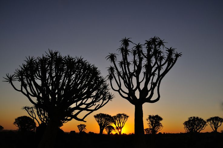 Namibia is a land of otherworldly landscapes and spaces that you need to experience for yourself! : Eric Bauer #Namibia #sunset #quivertrees