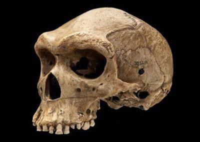 Nel 1922 un minatore svizzero ritrovò, in una miniera dello Zambia, un teschio datato dai 125.000 ai 300.000 anni fa. All'inizio si pensò addirittura ad [...]