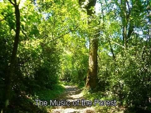Música del Bosque - Relajación y meditación