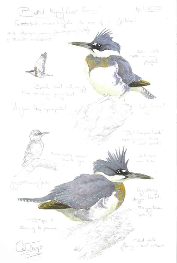Steph' Thorpe. Bird Artist and Illustrator | Artwork of bird species from the…