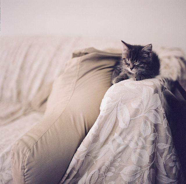 {Kitten Naps}