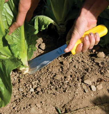 Lettuce Field Knife - Johnny Seeds
