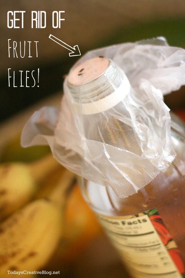 How To Get Rid Of Fruit Flies - Todays Creative Blog
