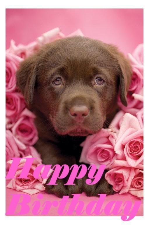 Best 25 Happy Birthday Puppy Ideas On Pinterest Happy
