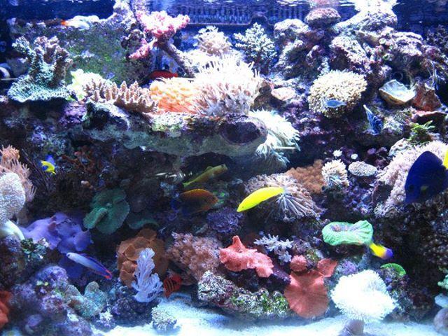 A1 Aquarium World - Aquariums Supplies in Townsville.