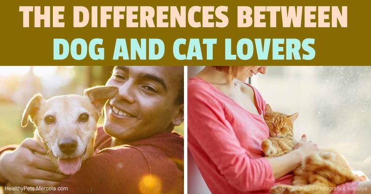 Professor of psychology Dr. Denise Guastello conducted a study that looked at the personality traits that differentiated dog and cat lovers.