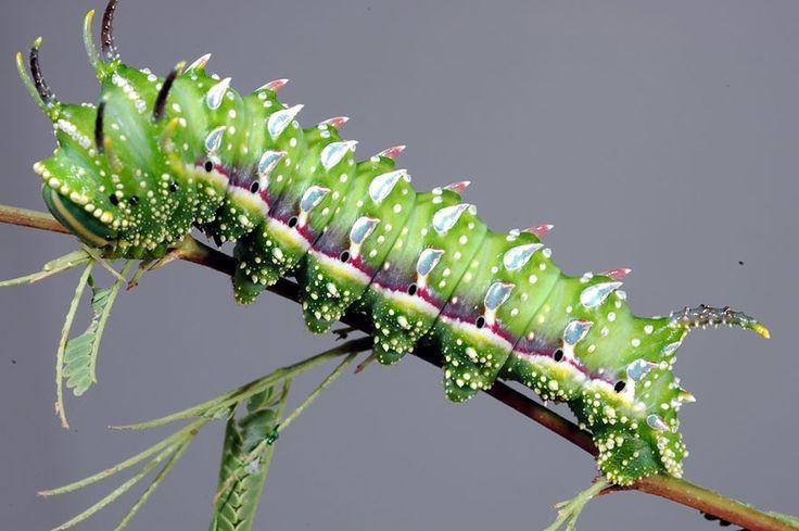 De chenille à papillon ces magnifiques transformations nous en mettent plein la vue