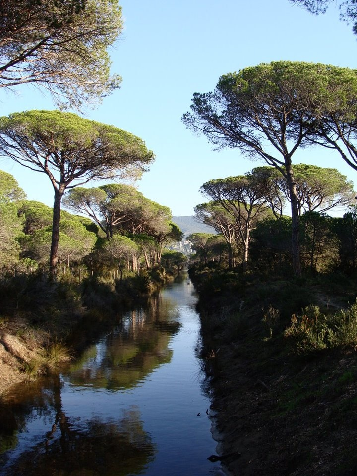 Vacanze in Maremma: Tutto quello che puoi vivere al Residence Residenza Principina / Maremma - i favolosi pini marini della pineta...