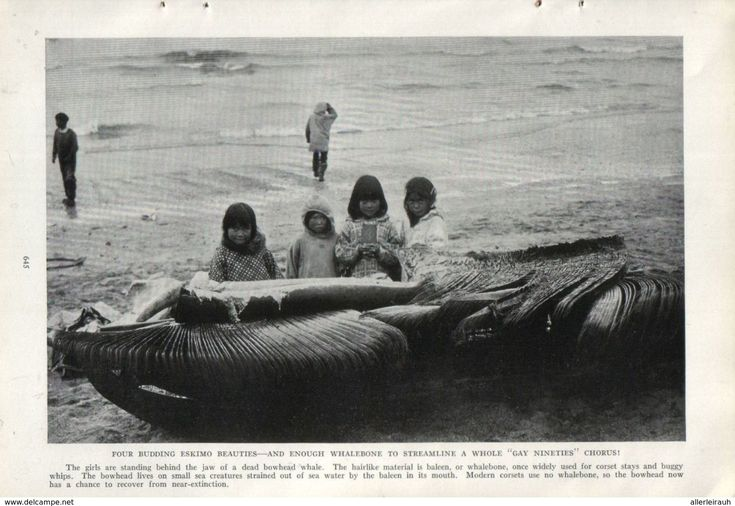 Innuit Girls Standing Behind The Jaw Of A Dead Bowhead Whale/  Print, Taken From A Journal/ 1939 - Bücher, Zeitschriften, Comics
