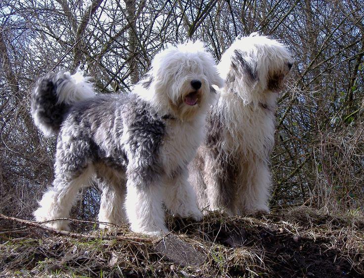 Mejores 22 imgenes de Perros en Pinterest  Perros Animales y