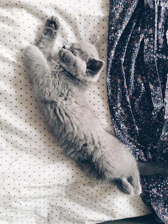 Le repos est très important pour ton état mental. Si tu ne cherches pas le repos tu vas être très fatigué et tu ne vas pas être capable a concentré.