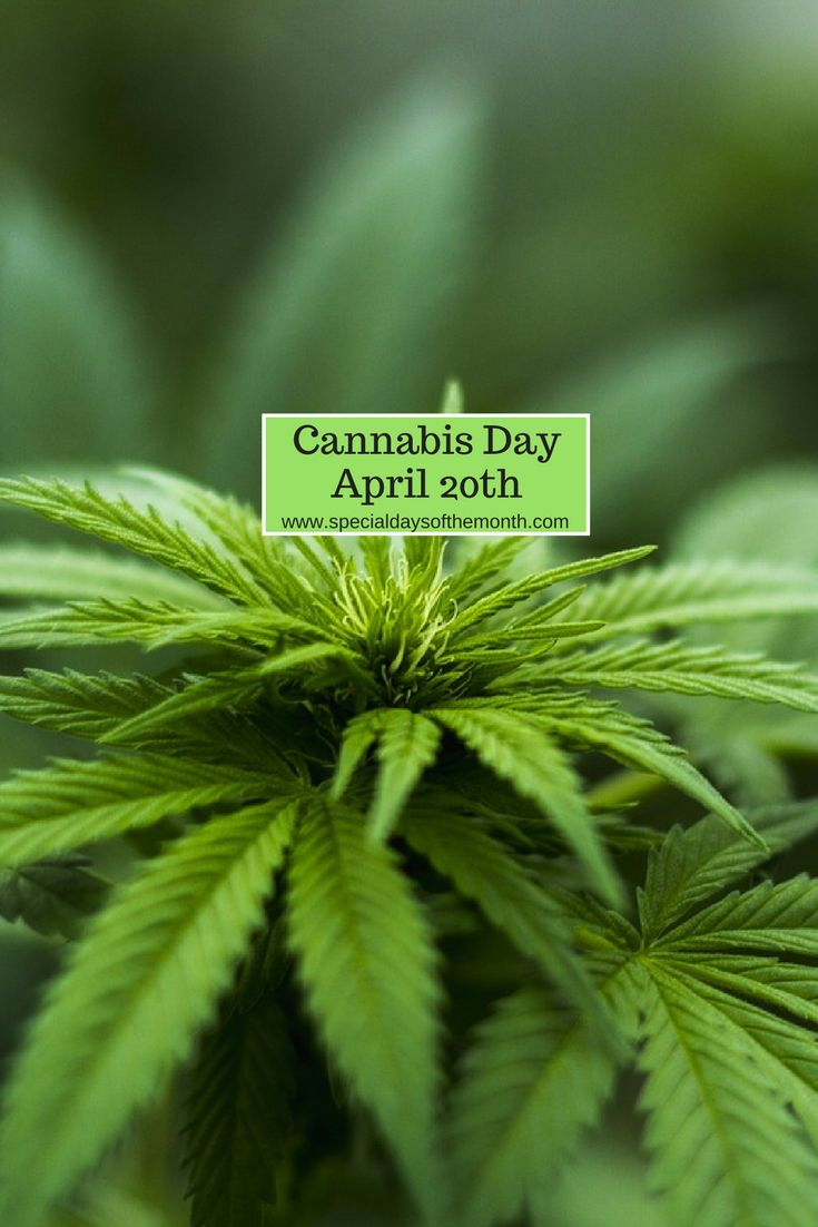 Cannabis Day, more commonly referred to as 420 is a popular holiday among college students. Read how you can celebrate and what the holiday is about.