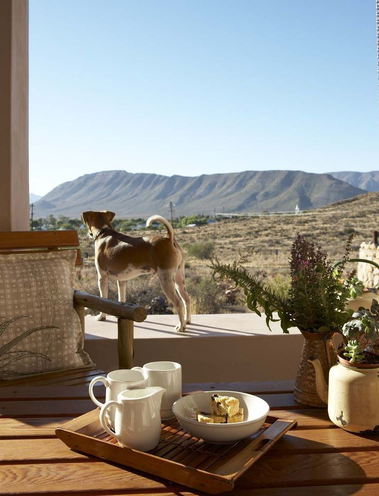 Jock taking in the view from our Karoo View Cottages